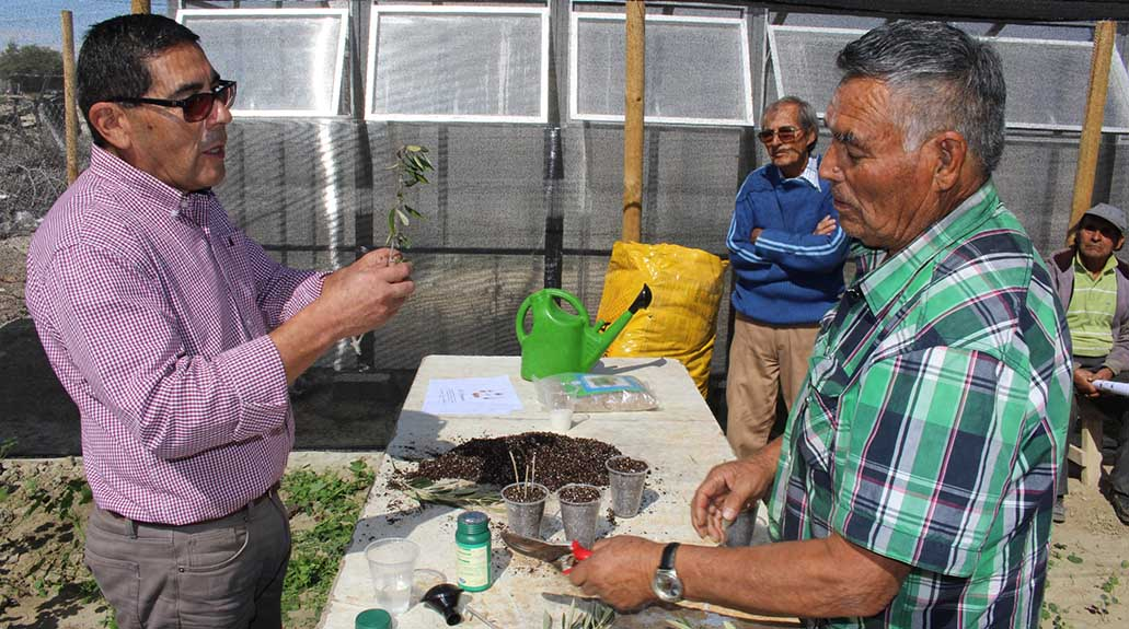 Agricultores en Canto del Agua aprenden cómo reproducir árboles por fragmentos de sus ramas